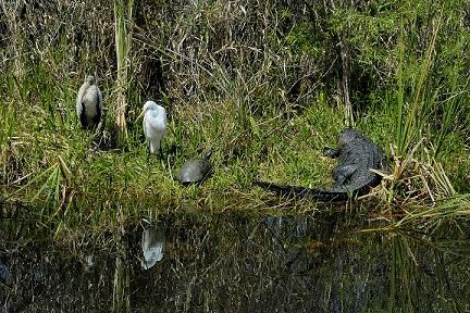 Parc Paradise Everglades