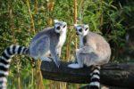 Madagascar : Les circuits préférentiels pour vos vacances